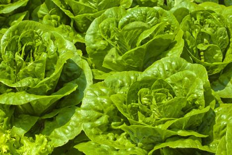Bildquelle: Shutterstock. Salat
