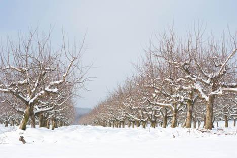 Bildquelle: Schnee