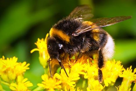 Bildquelle: Shutterstock.com Insekten
