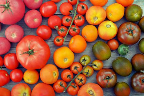 Bildquelle: Shutterstock.com Gemeuse Tomaten