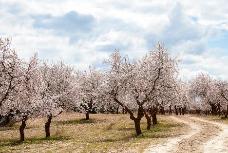 Bildquelle: Shutterstock.com Mandel