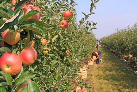 Belgischer Landwirtschafts- und Gartenbausektor