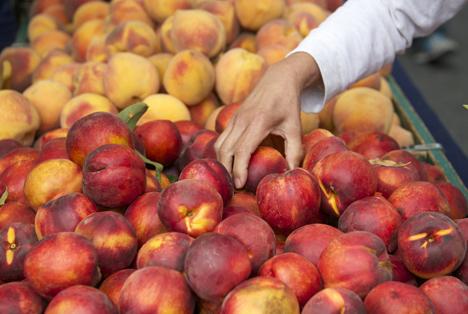 Spanien: Neue Studien der Obst- und Gemüsewertkette