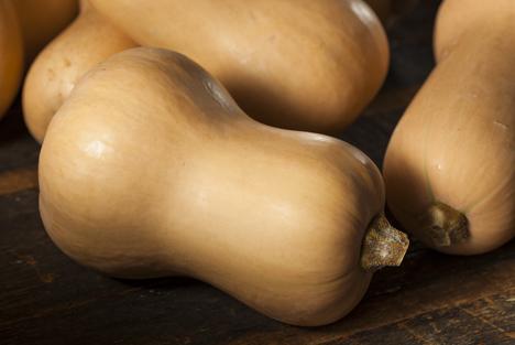 Bildquelle: Shutterstock.com Kürbisse Bio