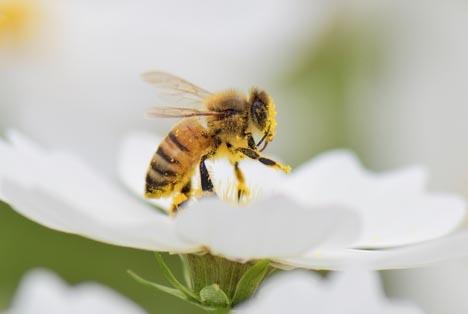 Bildquelle: Shutterstock.com Bienen