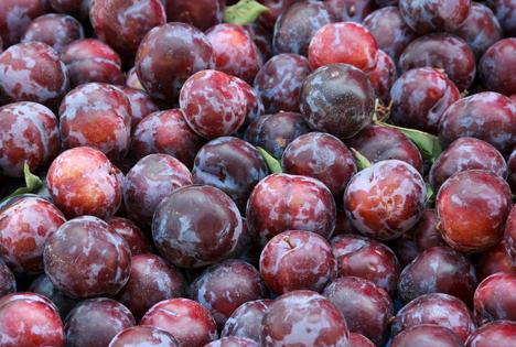 Bildquelle: Shutterstock.com Pflaumen