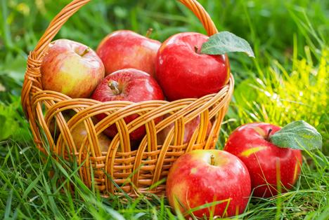 Umsatz von US-zertifizierter Bio-Landwirtschaftsproduktion 23% gestiegen
