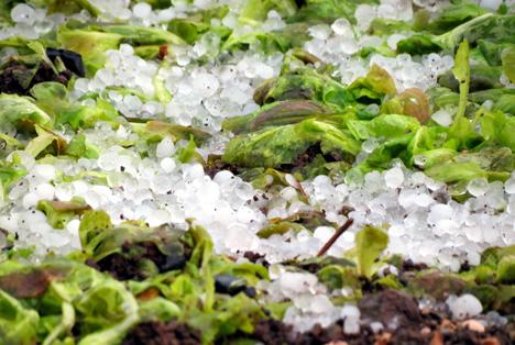 Italien – Coldiretti: Schäden infolge schlechten Wetters übersteigen 600 Millionen EUR