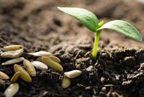 Bildquelle: Shutterstock.com Saatgut