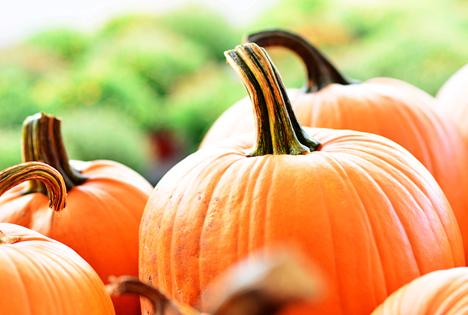 Bildquelle: Shutterstock.com Speisekürbisse