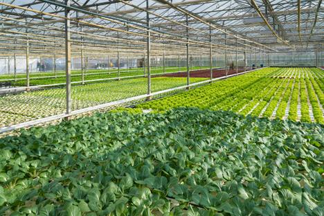 Bildquelle: Shutterstock.com Greenhouse