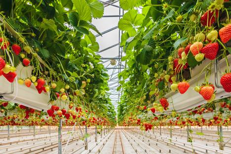 Bildquelle: Shutterstock.com Gewächshaus