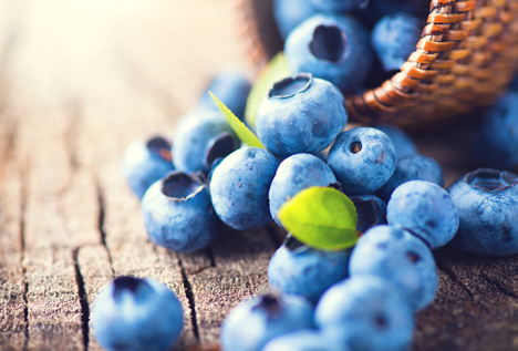 Bildquelle: Shutterstock. Blaubeeren close up