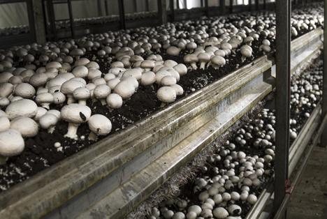 Bildquelle: Shutterstock.com champignons