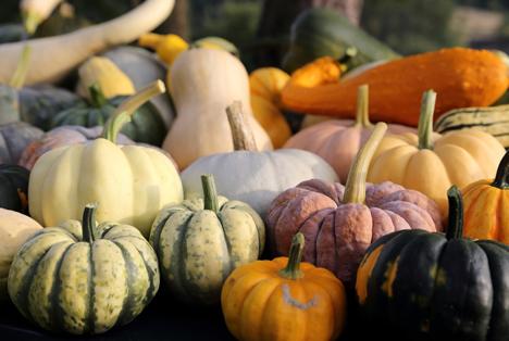 Bildquelle: Shutterstock.com  Kürbisse