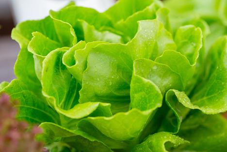 Bildquelle: Shutterstock.com Gemuese salat
