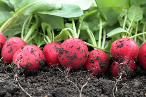 Rheinland-Pfalz: Gemüseanbau regional und betrieblich konzentriert