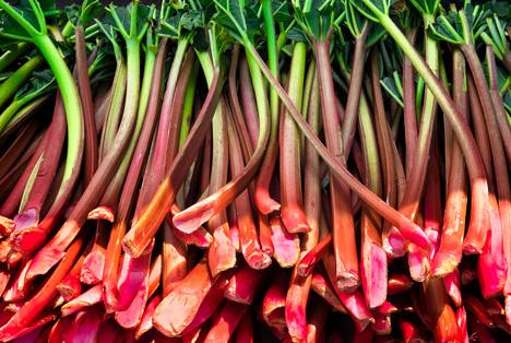 Bildquelle: Shutterstock.com Rhabarber