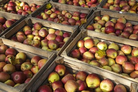 Bildquelle: Shutterstock. Apfel