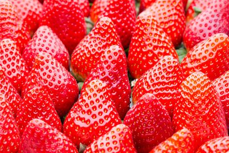 britische erdbeeren reifen drei monate fr her als je zuvor fruchtportal. Black Bedroom Furniture Sets. Home Design Ideas