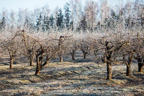 Bildquelle: Shutterstock.com Frost