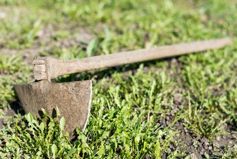Bildquelle: Shutterstock.com Bio