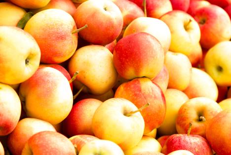 Bildquelle: Shutterstock.com Apfel