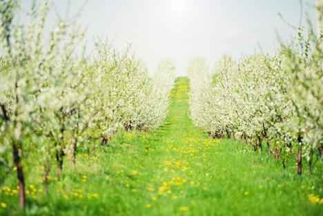 Bildquelle: Shutterstock.com Blüte