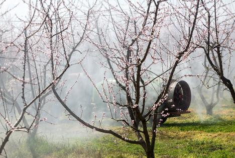 Quelle: Ververidis Vasilis / Shutterstock.com Pflanzenschutzmitteln Pfirsichbäumen