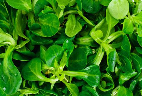 Bildquelle: Shutterstock.com Feldsalat
