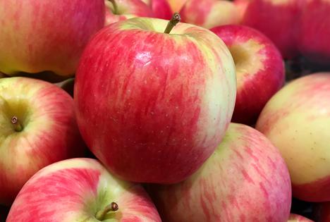 Bildquelle: Shutterstock.com Apfel Ambrosia USA