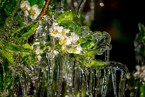 Bildquelle: Shutterstock.com Frost Obst Birne