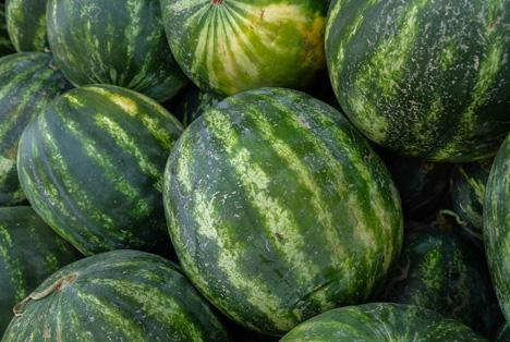 Bildquelle: Shutterstock.com Melon