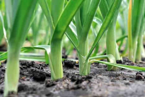 Bildquelle: Shutterstock.com Lauch