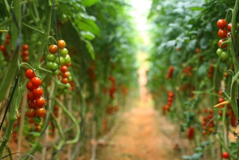 Bildquelle: Shutterstock.com Anbau