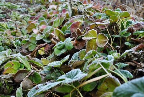 Bildquelle: Shutterstock.com Frost Schaden
