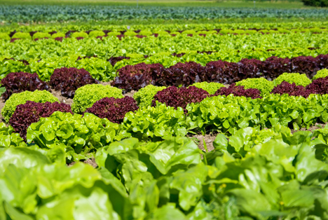 Gemüsekonsum in der Schweiz leicht rückläufig