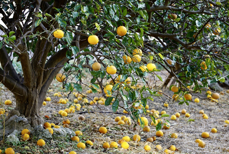 Bildquelle: Shutterstock.com Zitrus Orangen
