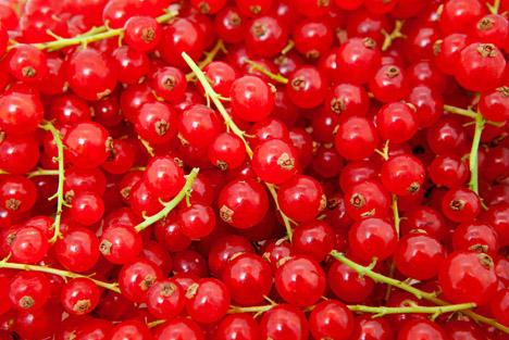 Bildquelle: Shutterstock.com Beerenobst