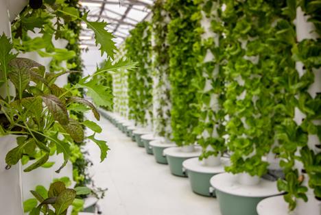 Bildquelle: Shutterstock.com aeroponics