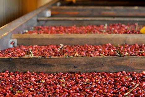 Bildquelle: Shutterstock.com Cranberry