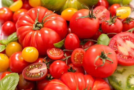 tomaten die niederl ndischen und belgischen importe berwogen fruchtportal. Black Bedroom Furniture Sets. Home Design Ideas