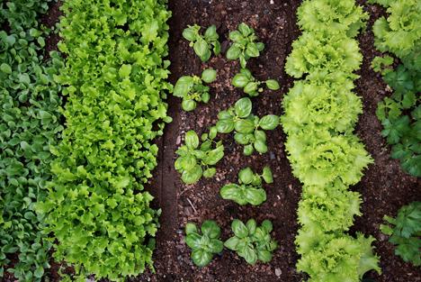 Bildquelle: Shutterstock.com Gartenbau