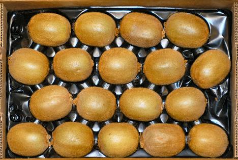 Bildquelle: Shutterstock.com Kiwi
