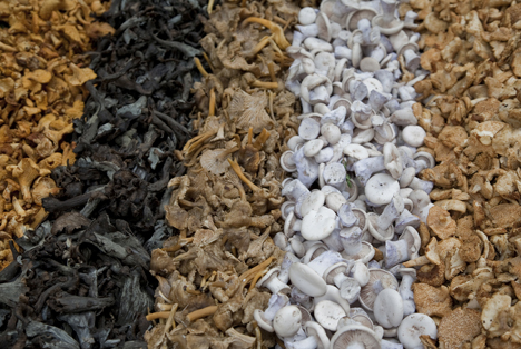 Bildquelle: Shutterstock.com Pilze