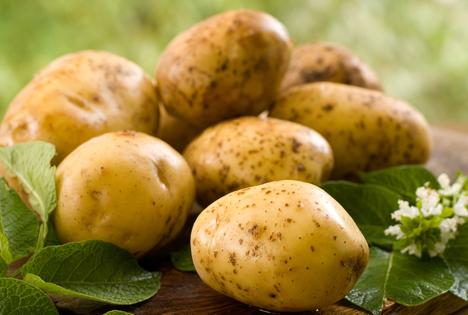 Bildquelle: Shutterstock.com Bio Kartoffel