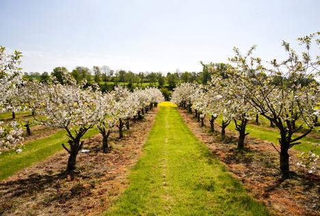 Bildquelle: Shutterstock.com Obst Frost