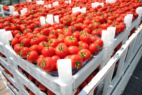 Bildquelle: Shutterstock.com Tomaten