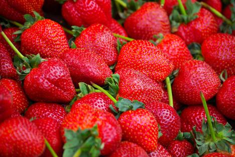 nrw die erdbeeren sind reif fruchtportal. Black Bedroom Furniture Sets. Home Design Ideas