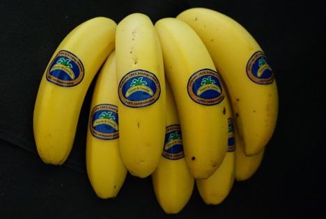 Asprocan 100 % biodegradable sticker bananen 2020 Foto © Asprocan